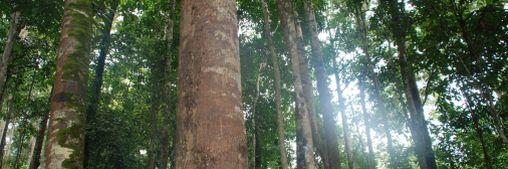 PEFC tropisch bos