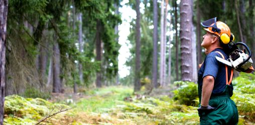PEFC bos boswerker