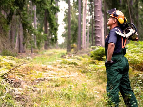 Boswerk man oogsten zaag - PEFC