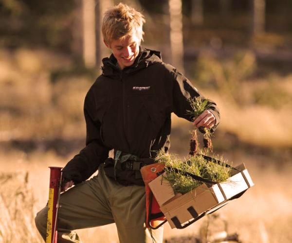 Boswerk planten man - PEFC