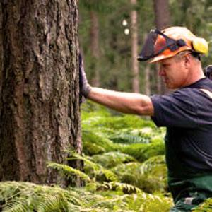 Boswerk oogsten man - PEFC