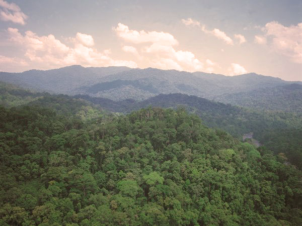 Tropisch bos - PEFC
