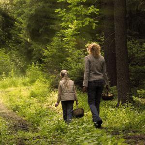 Wandelen in het bos - PEFC