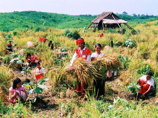 PEFC Myanmar project